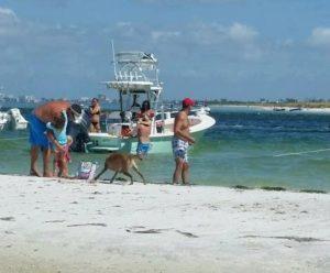 tampa-bay-fun-times-boat-tours-island-2