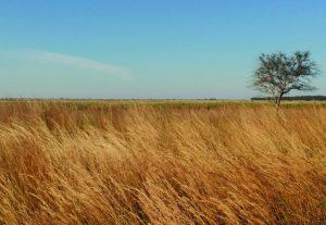 Kissimmee_Prairie_Preserve_State_Park