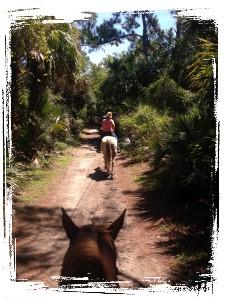 horseback trailride