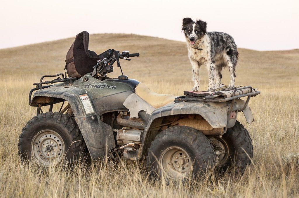 atv-rental-with-dog