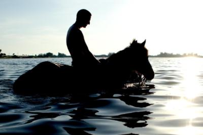the_real_beachhorse_05