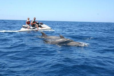 jet ski rental dolphin watching