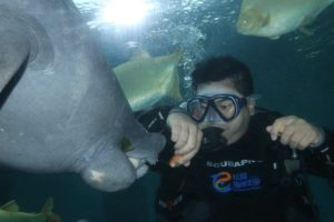 swim with manatee this weekend