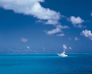 blue waters at miami boat rental