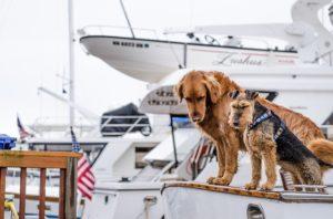 dog on miami boat rentals