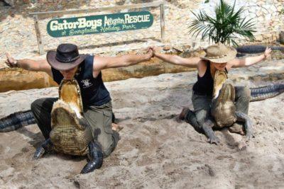 alligator tours